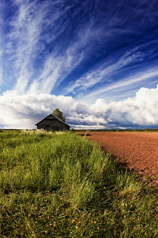 Tiny Barn House By The Summer Fields