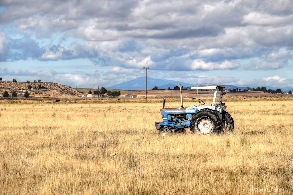 The Old New Holland