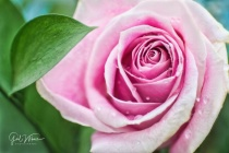 Pink Is Pretty!