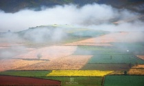 Cloud over Colorful farms