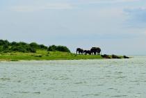 Elephants on shore