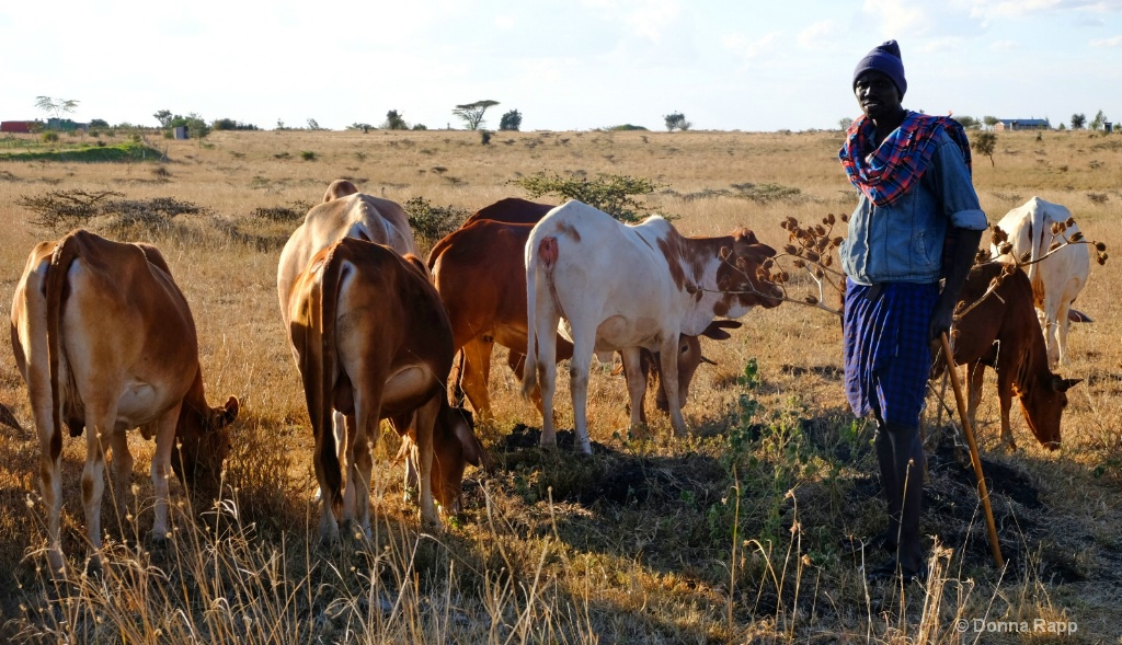 Tembea Masai  herd - ID: 15633974 © Donna Rapp