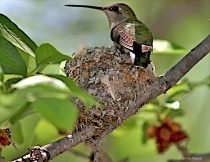 Protecting my nest