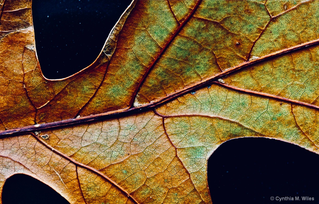 Leaf Cell Structure Against Night Sky