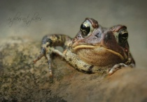 Spring Toad