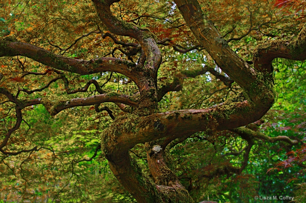 Japanese garden - ID: 15637656 © Lisza M. Coffey