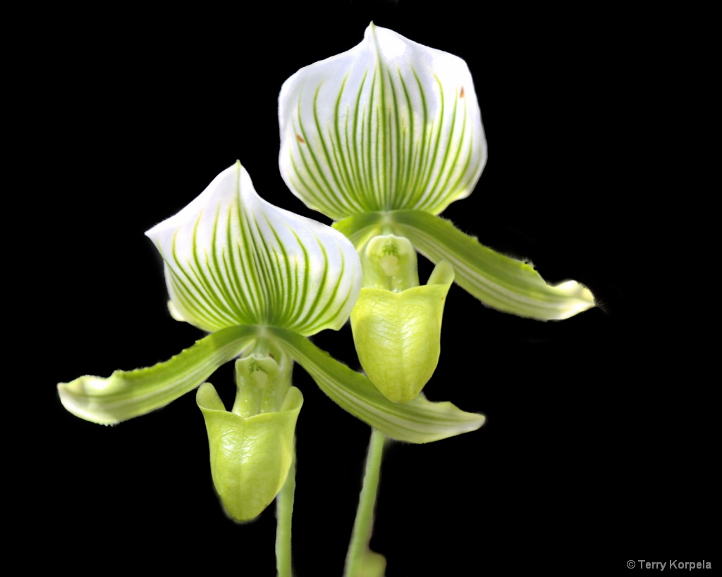 Berkeley Botanical Garden - ID: 15639269 © Terry Korpela