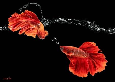 Splash & Bubble