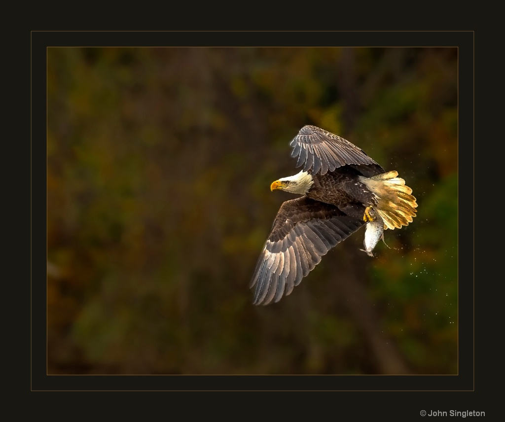 Afternoon Snack - ID: 15640483 © John Singleton