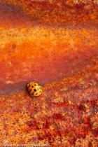 Ladybug and Rust - II
