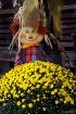 Happpy Scarecrow