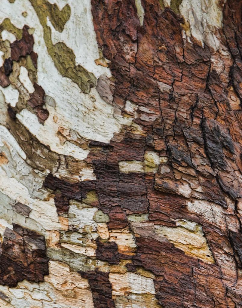 Old Tree - ID: 15645422 © Susan Johnson