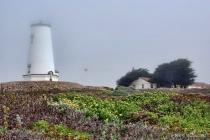 Foggy Day at Piedras Blancas