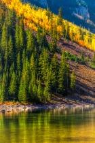 Aspen' Autumn Colors