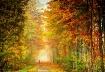 Below the Autumn ...