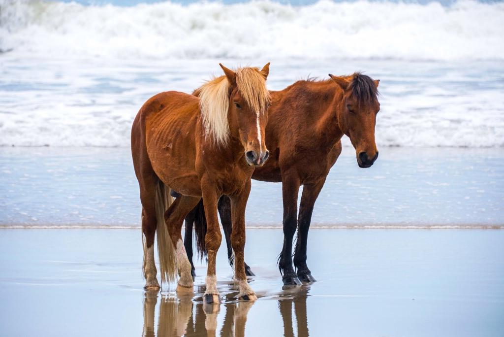wild horses - ID: 15650131 © Mark Seiter