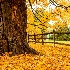 © Mark Seiter PhotoID # 15650499: Fall's blanket