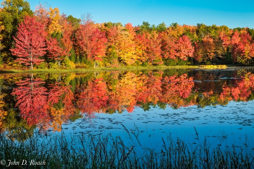 Rich Reflections of Fall