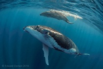 Humpback Mother Eyeing her Calf