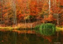 Gracie's Pond
