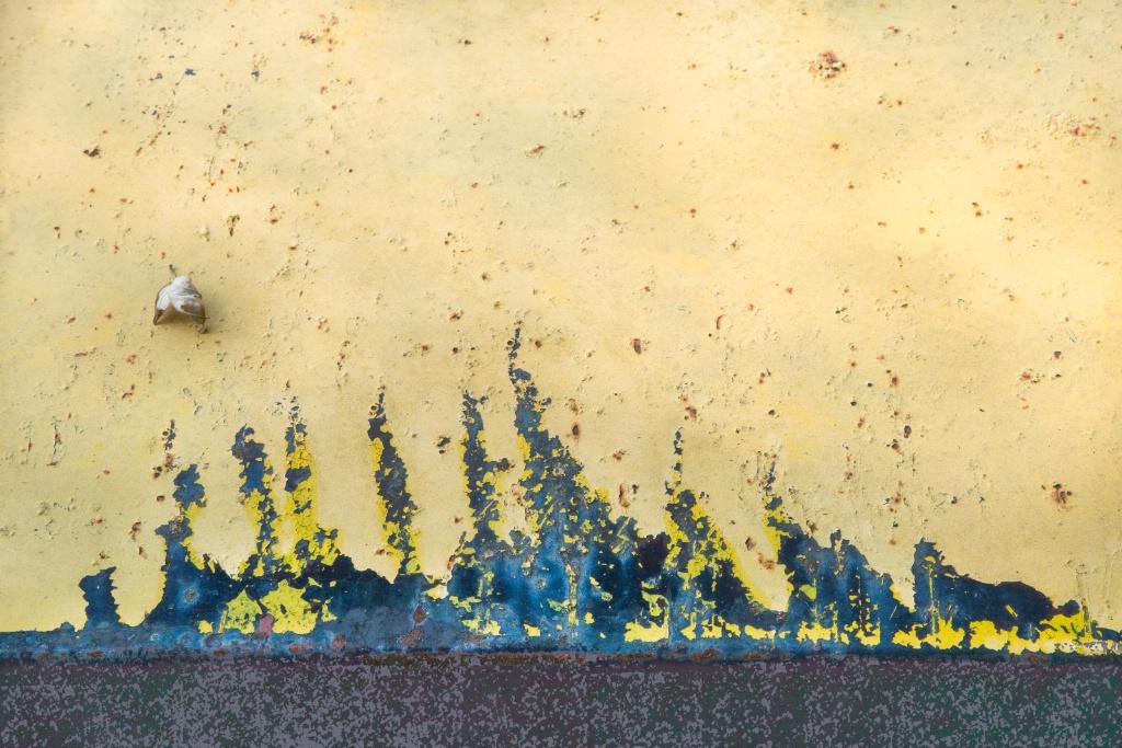 Wind Swept - ID: 15652644 © Marilyn Cornwell