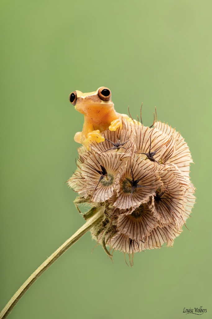 High Up - ID: 15653068 © Louise Wolbers