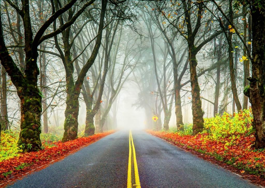Along an Autumn Road