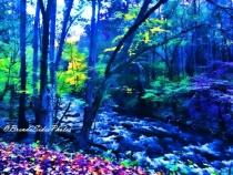 ~Rocky Mountain Stream~