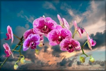 Orchids at Day Break