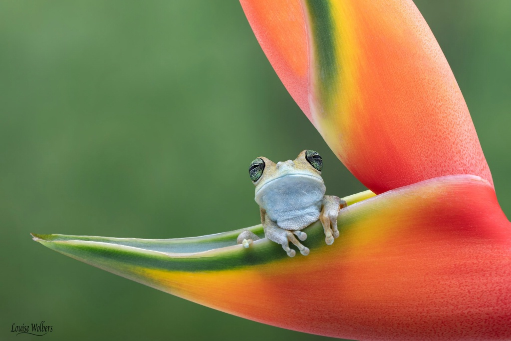 In Paradise - ID: 15657882 © Louise Wolbers