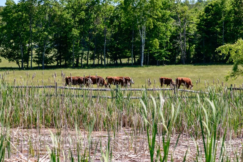 Lazy Vermont Summer Day! - ID: 15658165 © Kathleen Holcomb Johnson