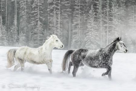 Steamy Winter Ponies