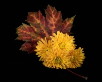 A Leaf with Mums
