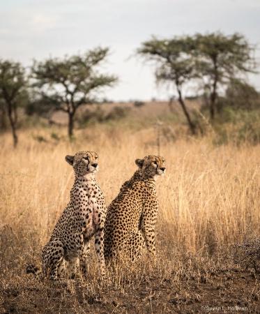 Tanzania jaguars