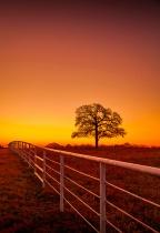 The Ranch Elder