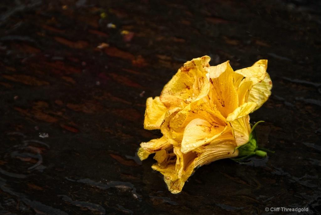 Still Life - Flower
