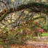 2Magnolia Gardens, Charleston - ID: 15661910 © Fran  Bastress