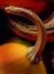 Tail of a pumpkin