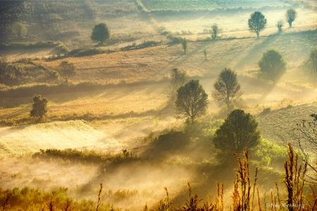 Mist Shape