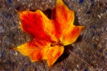 Artistic Fallen Autumn Leaf 6-0 F LR 11-8-18 J114