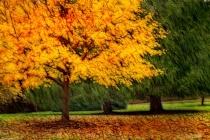 Artistic Autumn Gold 6-0 F LR 11-8-18 J044