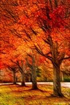 Artistic Four Fall Trees 6-0 F LR 11-8-18 J028