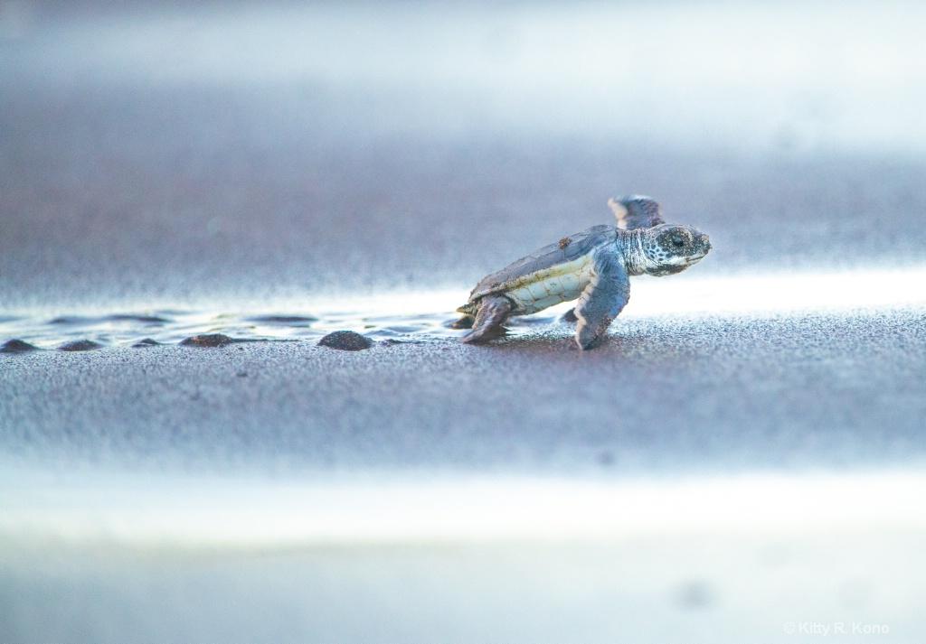 Headed to the Ocean - ID: 15667249 © Kitty R. Kono