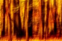Artistic Fall Forest Swipe 6-0 F LR 11-8-18 J007