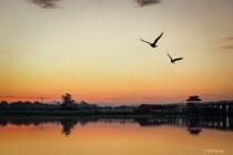 The birds and bridge.