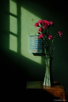 Flower and Shadow