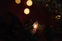 Light In The Christmas Tree
