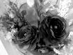 Beauty In Black &...