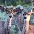 © Kelley J. Heffelfinger PhotoID # 15670815: Deer Crossing