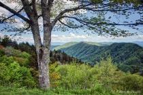 Smoky Mountains Viewpoint